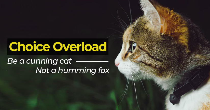 Choice Overload - Be a cunning cat, not a humming fox